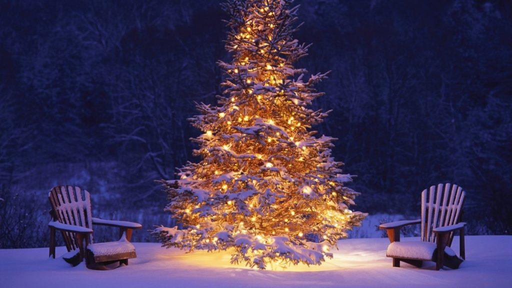 Controversa lunii Decembrie: Bradul de Craciun
